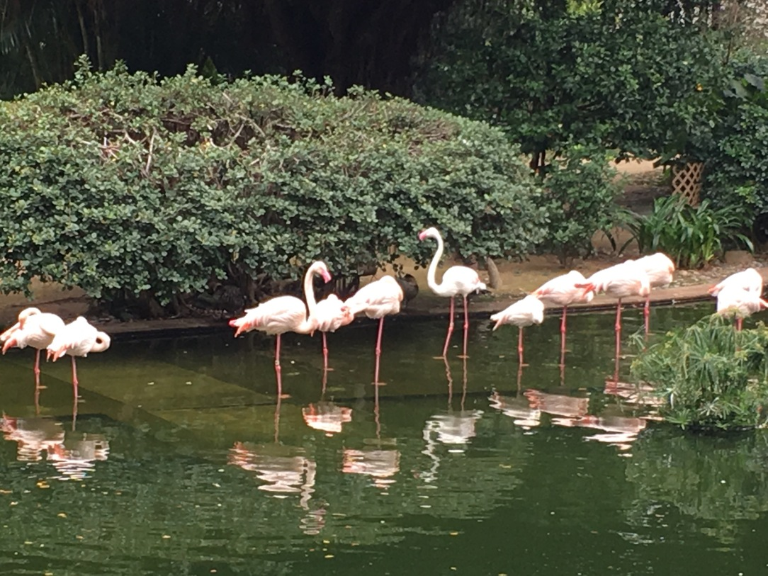 hong kong, hong kong kowloon park, hoff kong with toddler, hong kong 5 days itinerary, hong kong mongkok, kowloon, hong kong with baby