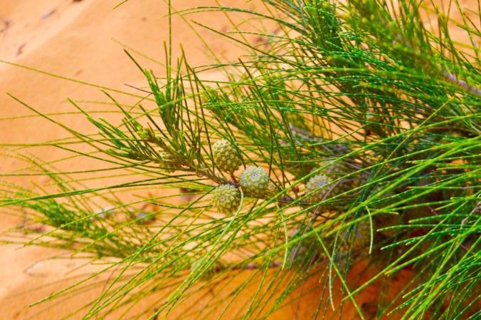 Red Sand Dunes, Mui Ne, Vietnam, day trip mui ne