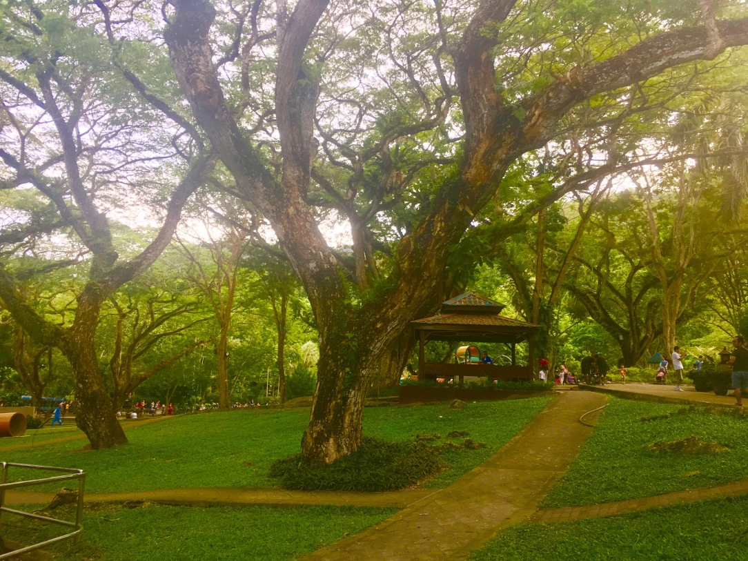 Nature walk for kids, nature toddler activity, nature rain toddler, vitamin N book review, youth park penang