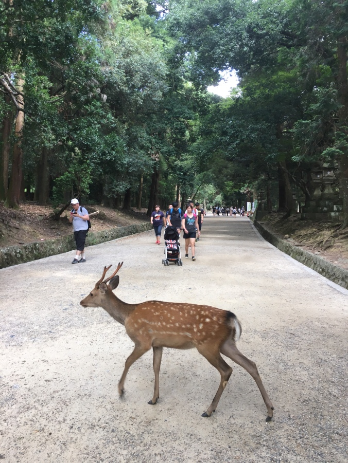 Nara Trip with baby, Japan with toddler, Japan family travel blog