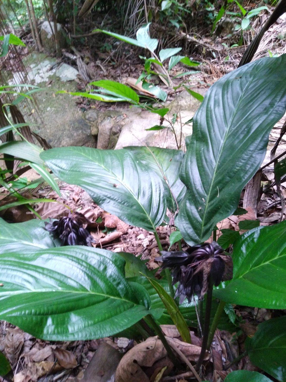 penang botanic garden floura and fauna
