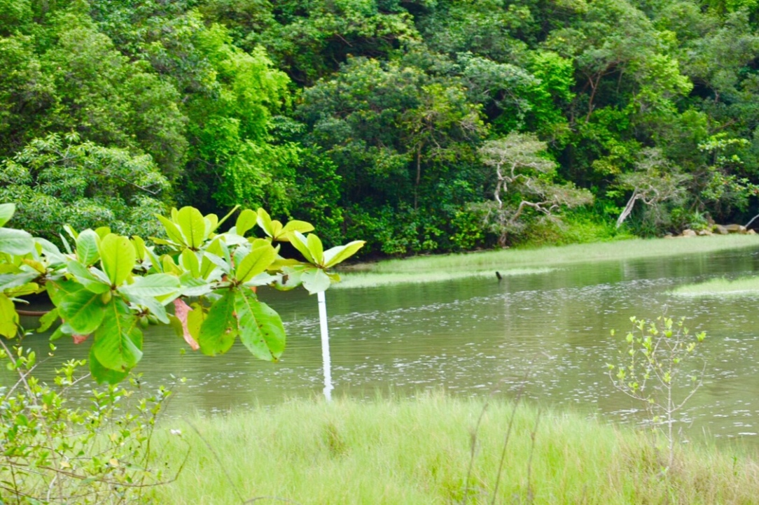 Memomictic lake in penang national park