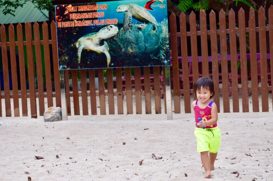 Toddler in Turtle beach in penang national park